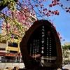 地球(日本)🌎の真裏:ブラジルの「旧)日本人街」に植えられた=『八重桜🌸』=(東洋人街/リベルダージ地区/サンパウロ)