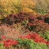小春日和と紅葉の週末