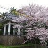 葛飾・宝蔵院の桜