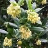 ヒメイチゴキの花と実