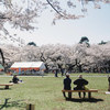 小金井公園桜色 #filmphotography