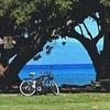 ハワイに恋して #105 リサイクルハワイ