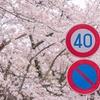 三密を避けて桜をとってきた(風景編)