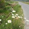 開花 真ん中の Blooming