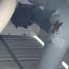 豊川市で軒下に巣を作ったスズメバチの駆除のご依頼!