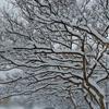 デパス(エチゾラム)情報で昨夜は大荒れ 今日はドカ雪の中の通院