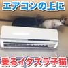 エアコンの上に乗るイタズラ子猫!朝からやめなさい!w