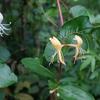 五月の庭の花・好きな花