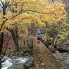 黄葉が見ごろの西大台ヶ原(10月28日)