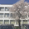 バレットジャーナル3月、4月(桜)