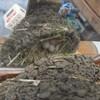 ギックリ腰とツバメの産卵