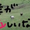 田舎から出てきました。