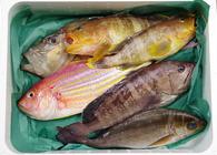何が届くかわからない生魚ガチャ! 産地直送の「お任せ鮮魚セット」を余すことなく楽しむ方法