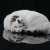 マントヴァの猫