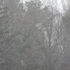 林道は日陰に雪があった