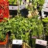 【タイで自炊】野菜の値段(2018年)