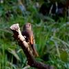 手賀の丘公園の鳥たち(ウソ・カケス・ジョウビタキ・アオジ・ヤマガラ・シロハラ・シジュウカラ
