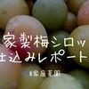 自家製梅シロップ仕込みレポート!畑で収穫したウメを使って梅シロップを仕込んでみた!