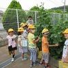 2年生:生活 野菜の観察