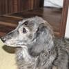 急性膵炎の犬を連れてひがし東京夜間救急動物医療センターへ