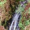 奥明日香・飛鳥川の川上、フナト川 男渕  斉明女帝の雨乞い神事(3)龍神が住む滝 三頭の狛犬