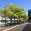皆が好きな木・クスノキについて/楠・樟/トトロ/彫刻