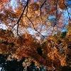 2017秋・食の京都旅