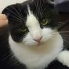 保護団体の譲渡条件(保護猫カフェ)
