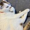 【臆病な猫】日々の生活と私の体験談㉕!!