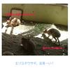 円山動物園へ行ってきました #2
