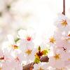 二十四節気 4月4日より清明。晴れ渡った青空と花々のコントラストが最も美しい頃です。