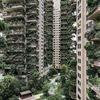 【中国】「森林の中での生活を提案」…緑あふれるマンション、蚊の大量発生でほぼ無人に
