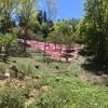 芝桜を見渡す