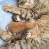 保護猫ムーアさんの出産③2匹目以降の出産。