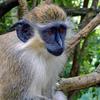 バルバドス - 鍾乳洞&野生動物保護区