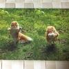 岩合光昭の世界ネコ歩き写真展 丹波市立植野記念美術館