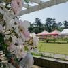 先週は生田緑地のバラ園に行ってきました。