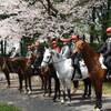 桜とともに…さあスタート!