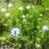 【今日のお花365日】6~10日目「アヤメ・柏葉紫陽花・スイスイ・レモン・ニゲラ」