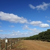 【保存版】2年間のワーホリで知り得たオーストラリアのファーム情報