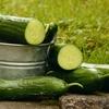 なぜ急に?夏野菜「きゅうり」の4つの栄養価