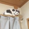 子猫 トリミング