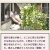 中村倫也company〜「ドラマ・・発掘」