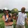 大ナゴヤツアーズ スイカ収穫体験をやってみて