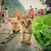 十分瀑布にいた耳が大きい猫の親子