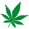 海外の大麻合法の国で日本人が大麻を吸ったら捕まる件