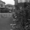 Photo No.311 / ひまつぶしの一日