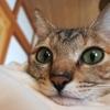 猫たち、amazonの梱包紙に大興奮!