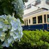 都電荒川線(東京さくらトラム)に乗って下町へ:紫陽花とバラとチンチン電車