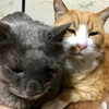 猫の鼻腔内リンパ腫⑩くぅの誕生日